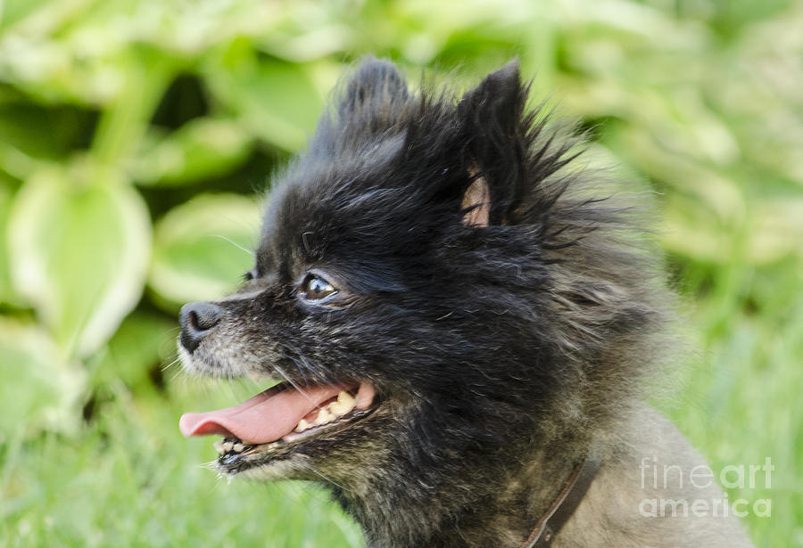 Dog Photograph - Gidget by Deborah Smolinske