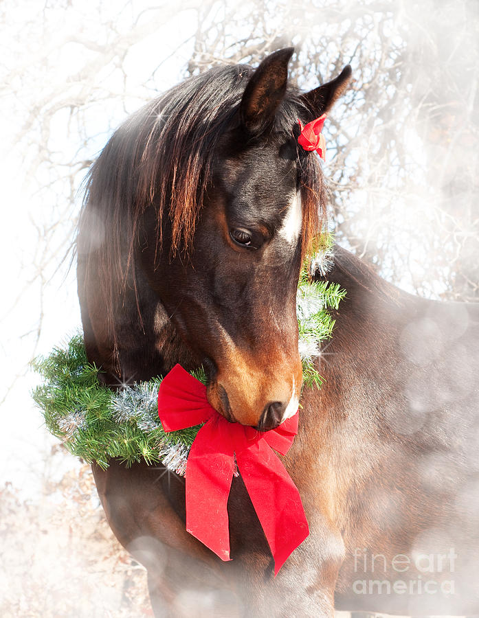 Cute Photograph - Gift Horse by Sari ONeal