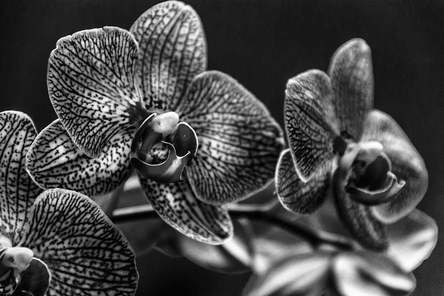 Flowers Photograph - Gift Of Flowers by Marvin Spates