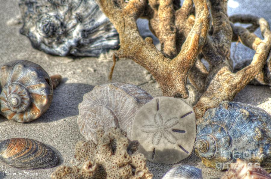 Seashells Photograph - Gifts From The Sea by Benanne Stiens