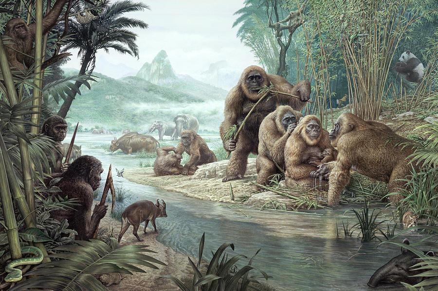 Gigantopithecus Photograph - Gigantopithecus With Homo Erectus by John Sibbick / Science Photo Library
