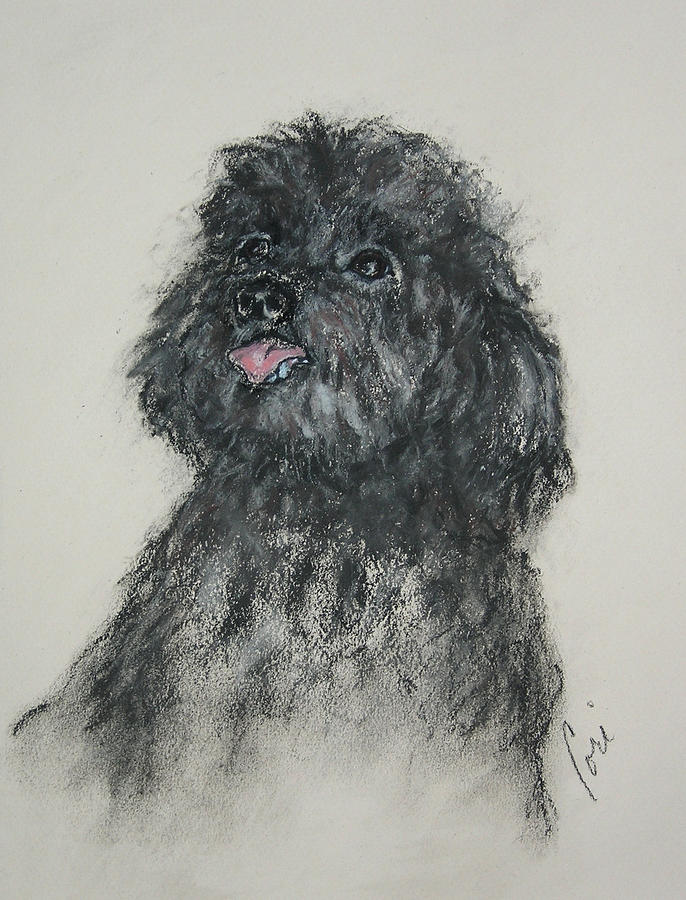 Poodle Drawing - Gigi by Cori Solomon