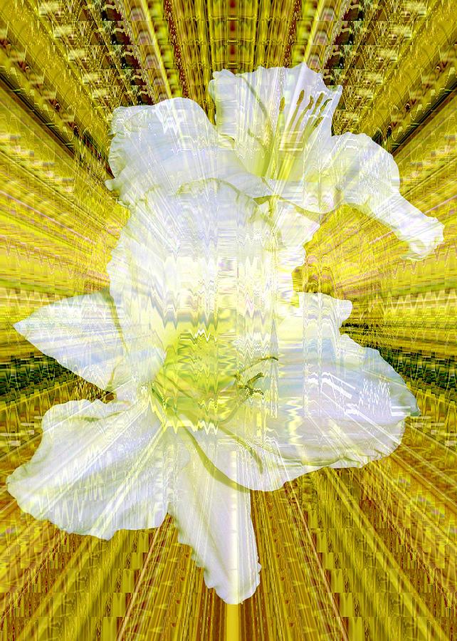 Daylily Photograph - Gilding The Daylilies by Susan Elizabeth Dalton