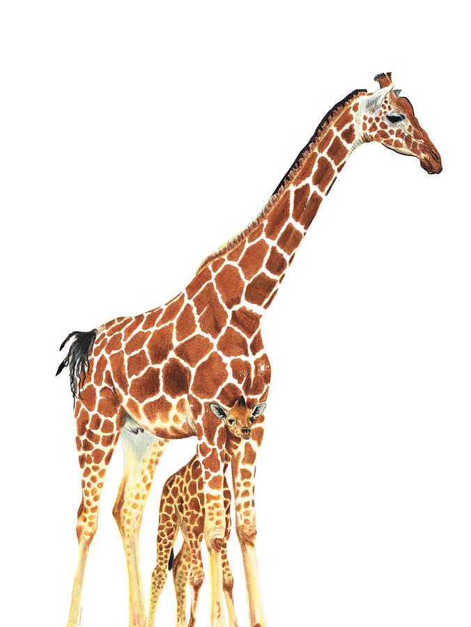 Giraffe Painting - Giraffe Art - A Mothers Love - By Sharon Cummings by Sharon Cummings