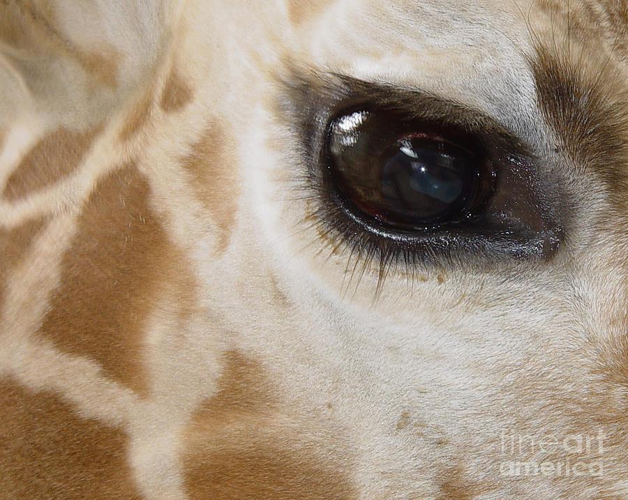 Giraffe Eye Photograph By Heather Coen