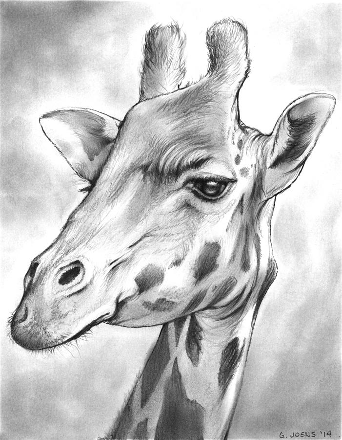 Giraffe Drawing by Greg Joens Cool Giraffe Drawing