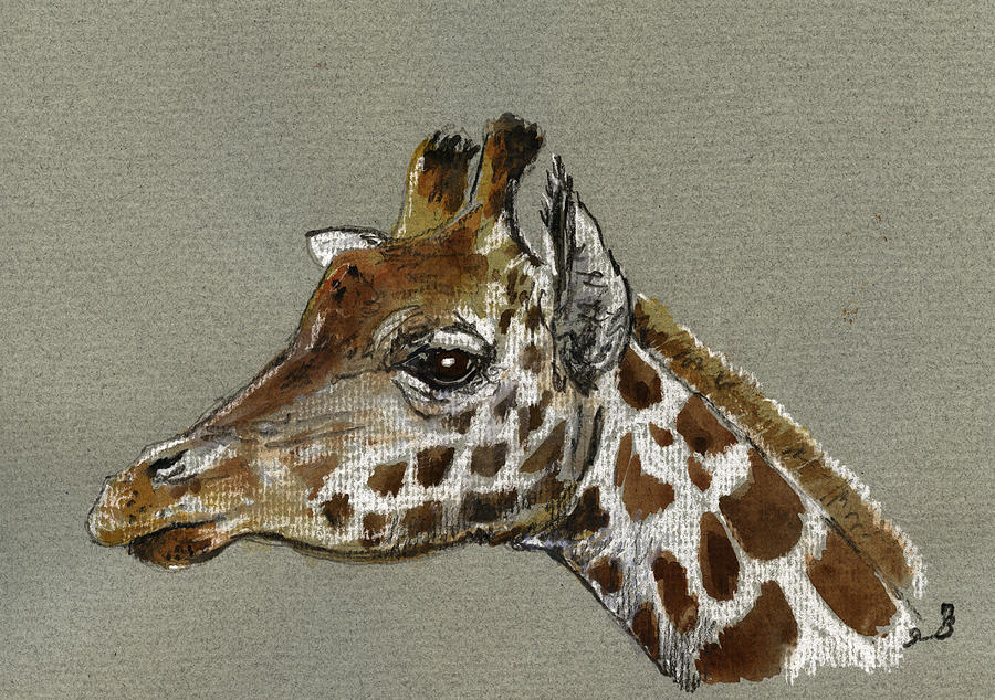 Drawing Painting - Giraffe Head Study by Juan  Bosco