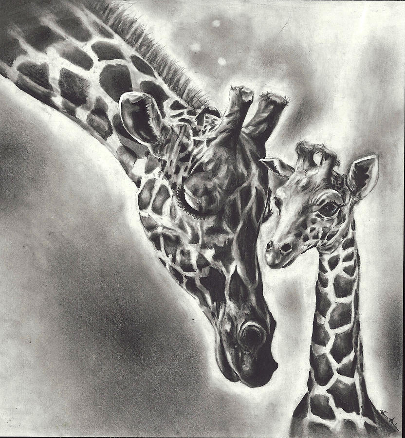 Giraffe Drawing by Vanessa Anderson Cool Giraffe Drawing