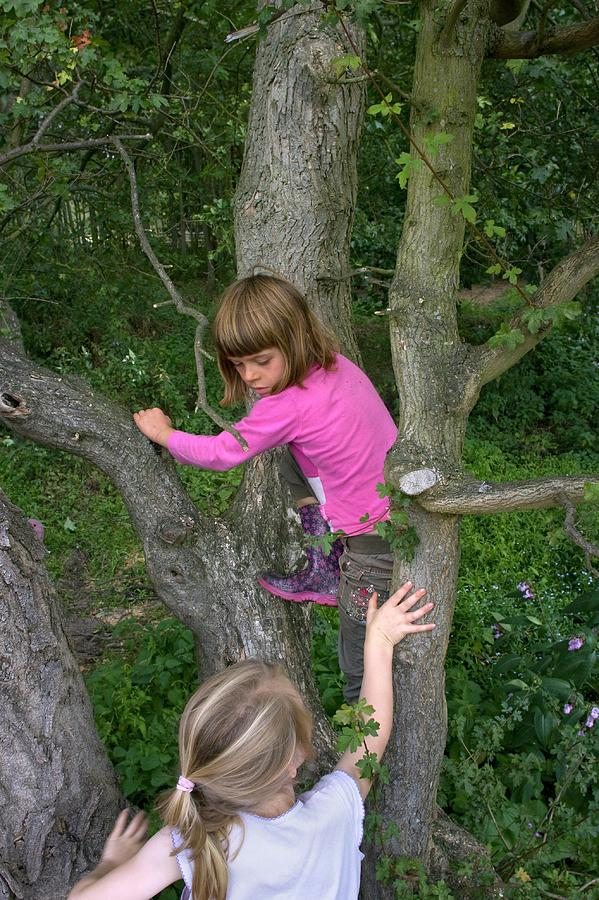 Human Photograph - Girls Playing In A Tree by David Woodfall Images/science Photo Library