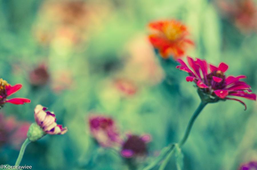 Flowers Photograph - Girly by Kornrawiee Miu Miu