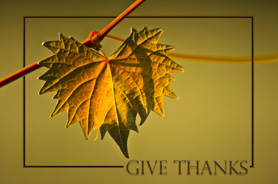 Leaves Photograph - Give Thanks by Carolyn Marshall