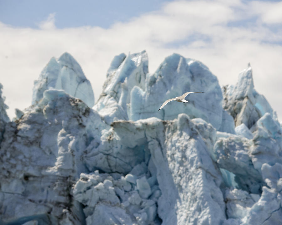Glacier Photograph - Glacial Flight by Vicki Jauron