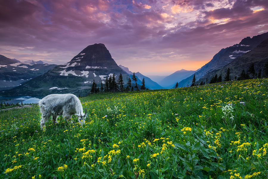 Clouds Photograph - Glacier National Park 4 by Larry Marshall