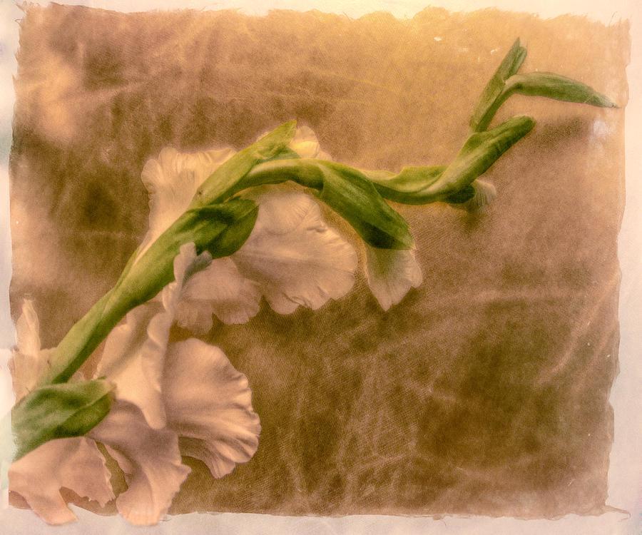 Gladiola Digital Art - Gladiola by Jill Balsam