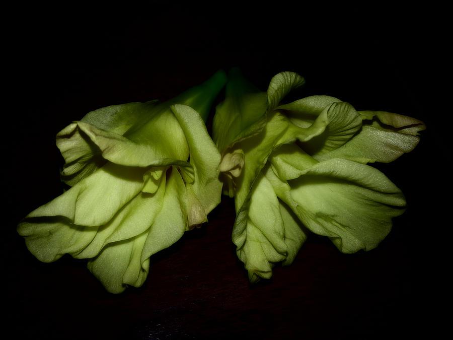 Gladiolus Photograph - Gladiolus In Shadows by Paulina Roybal