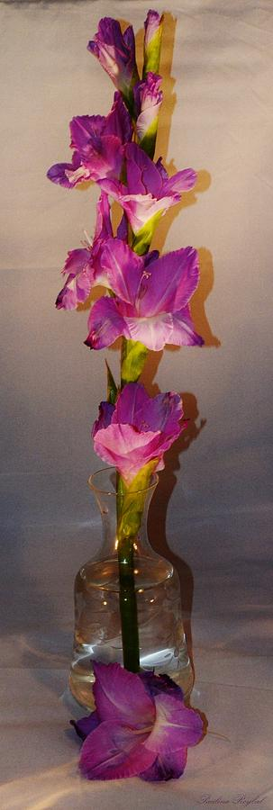 Flower Photograph - Gladiolus tower by Paulina Roybal