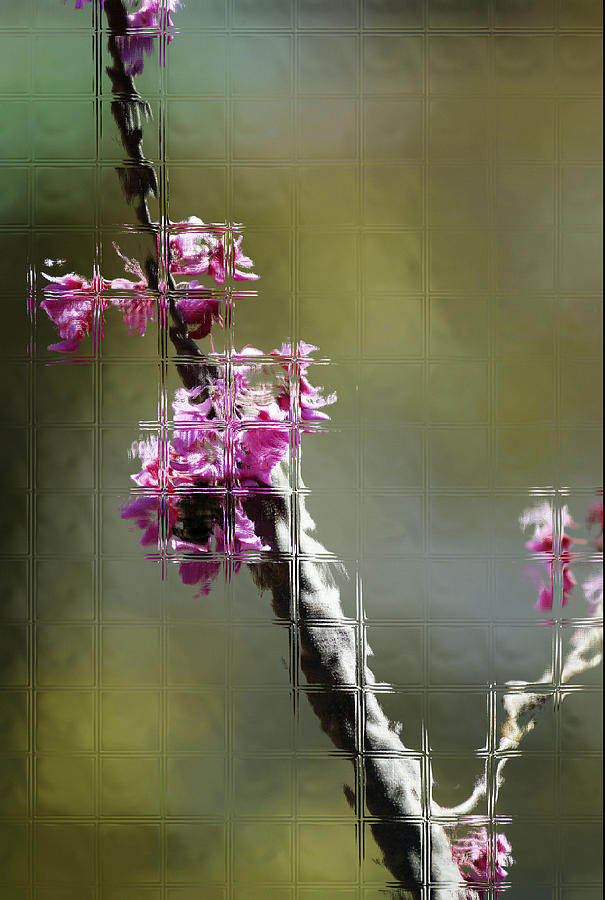 Flowers Photograph - Glass by Joe Bledsoe
