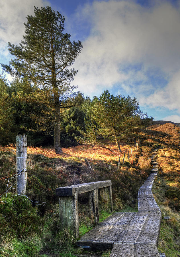Tranquility Photograph - Glendalough Path by Philip Devereux.