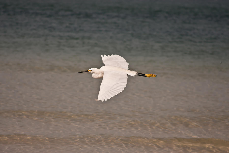 Gliding Photograph - Gliding Bird by Paulina Szajek