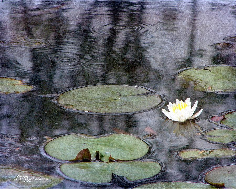 Water Photograph - Glimmer by Priscilla Richardson