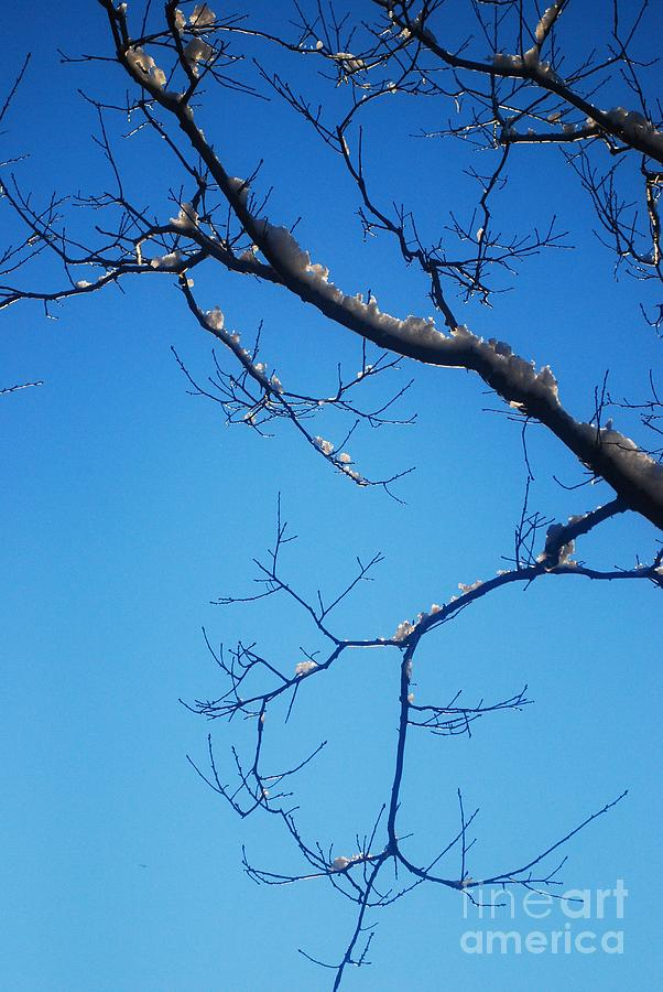 Tree Photograph - Glimmering Branches by Susan Hernandez