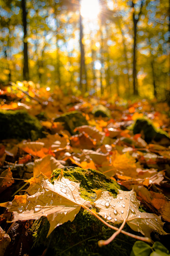 Door County Photograph - Glistening Autumn Dew by Ever-Curious Photography