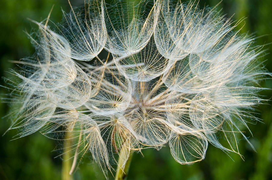 Blooms Photograph - Glittering In The Grass by Cara Moulds
