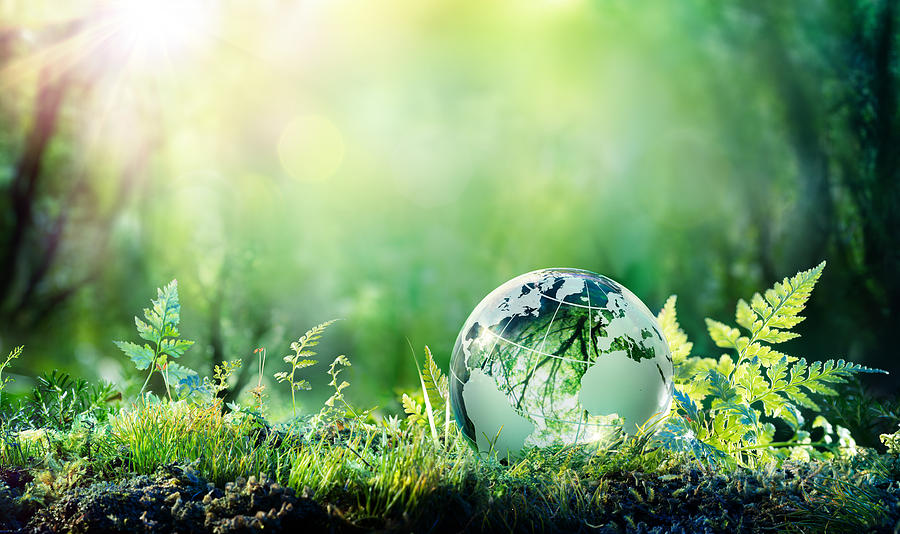 Globe On Moss In Forest - Environment Concept Photograph by RomoloTavani