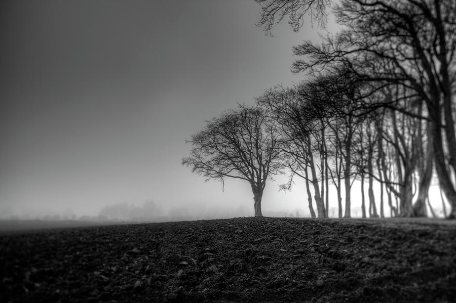 Gloomy Forest Photograph by Sindre Ellingsen