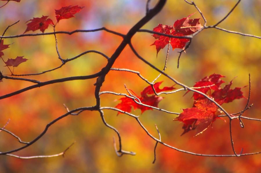 Landscape Photograph - Glory Of Fall by Eva Kato
