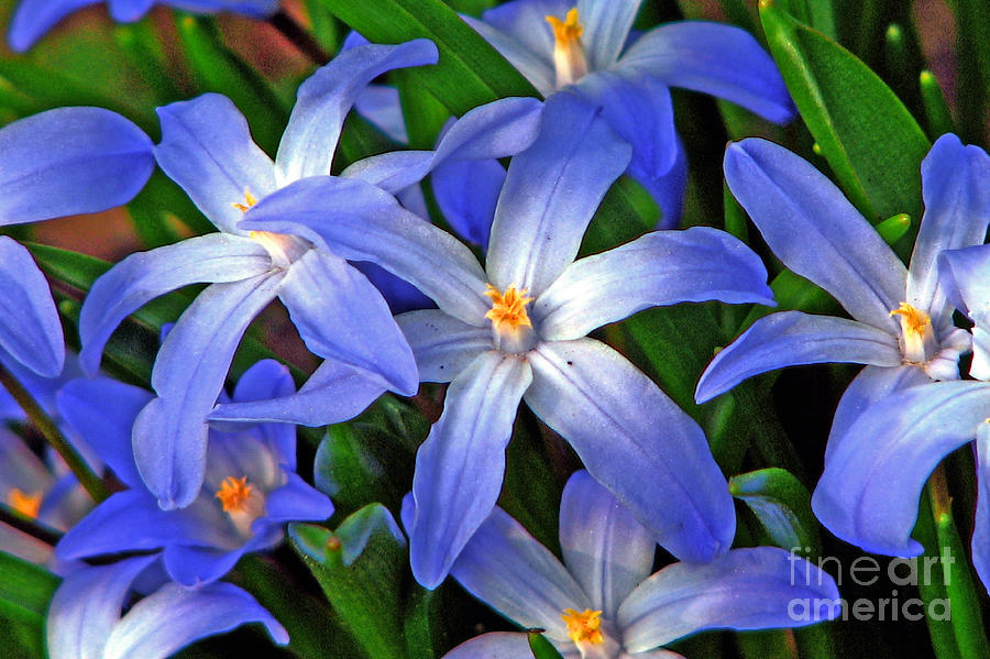 Spring Photograph - Glowing Blue by Chris Anderson