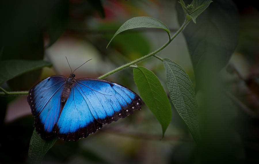 Penny Lisowski Photograph - Glowing Blue by Penny Lisowski