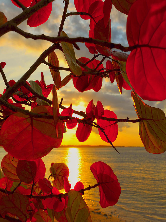 Beach Photograph - Glowing Red by Stephen Anderson