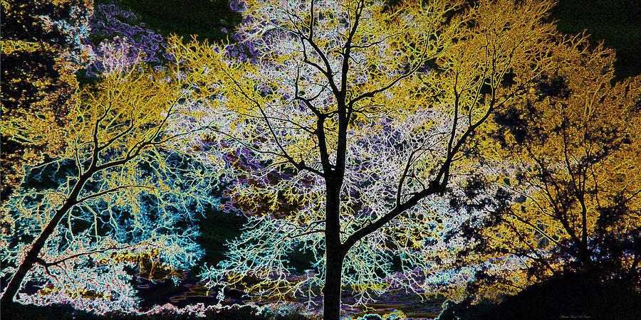 Glowing Trees by Sheila Kay McIntyre