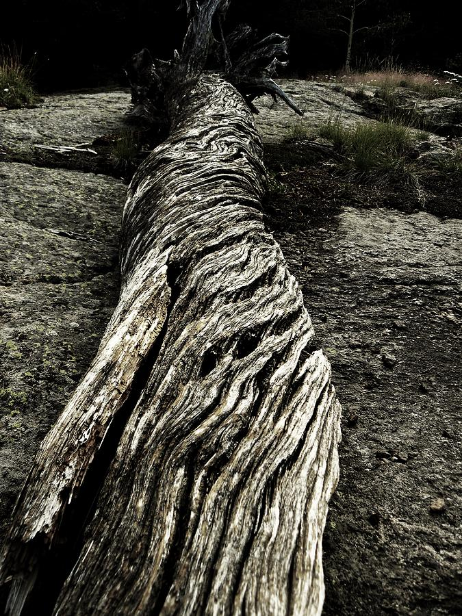 Wood Photograph - Gnarled by Christian Rooney