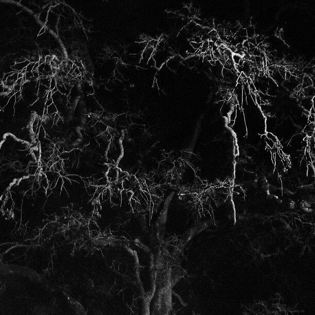Shadows Photograph - Gnarly Night Oak by CML Brown