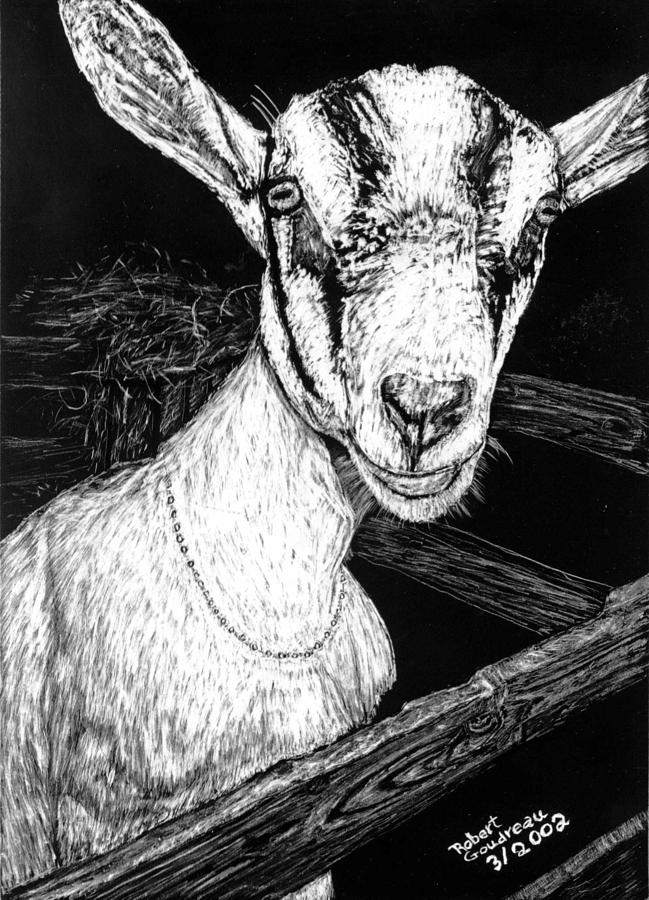 Goat Drawing - Goat at Country Fair by Robert Goudreau