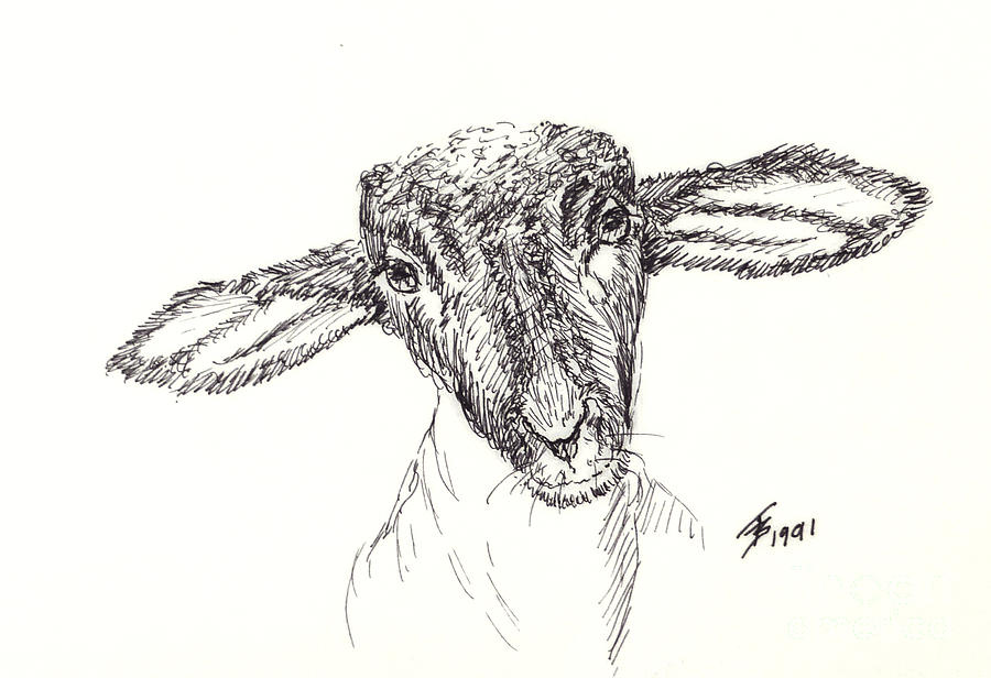 Goat Gaze by Art By - Ti   Tolpo Bader