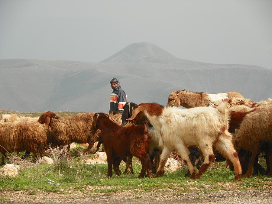 Shepherd Photograph - Goat Herder In Jordan Valley by Noreen HaCohen
