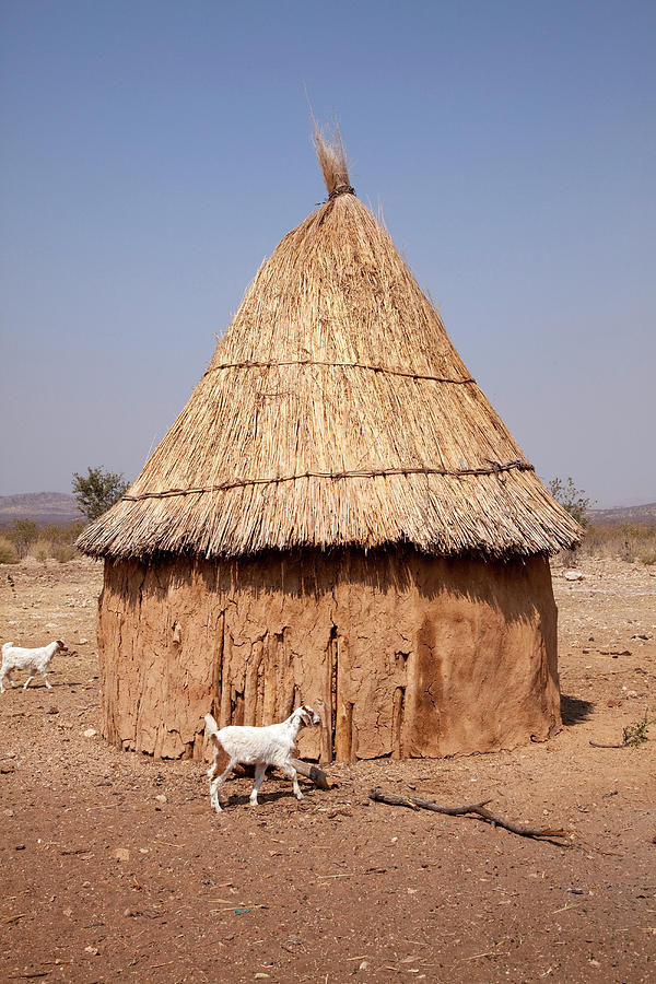 African Photograph - Goats And Hut In Himba Village, Opuwo by Jaynes Gallery