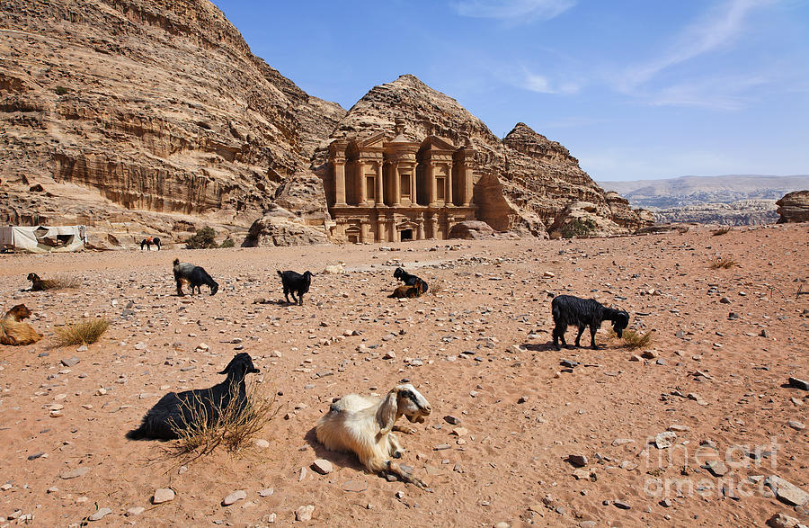 Petra Photograph - Goats In Front Of The Monastery At Petra In Jordan by Robert Preston