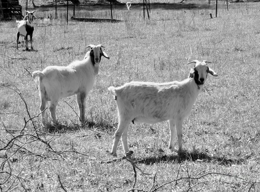 Three Amigos Photograph