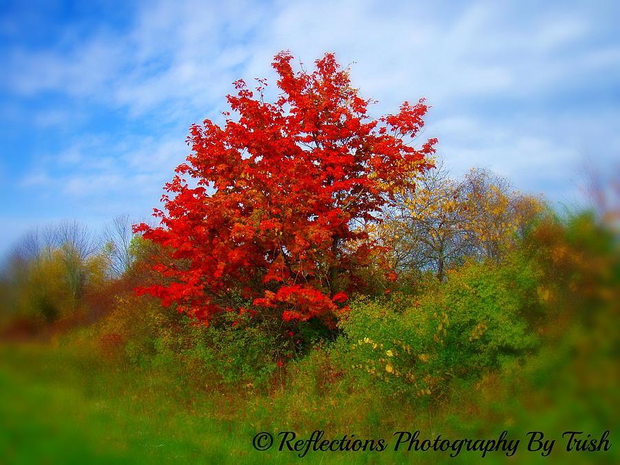 Autumn Photograph - Gods Autumn Canvas by Trisha Neely