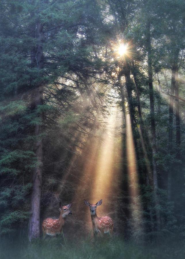 Light Photograph - Gods Creatures by Lori Deiter