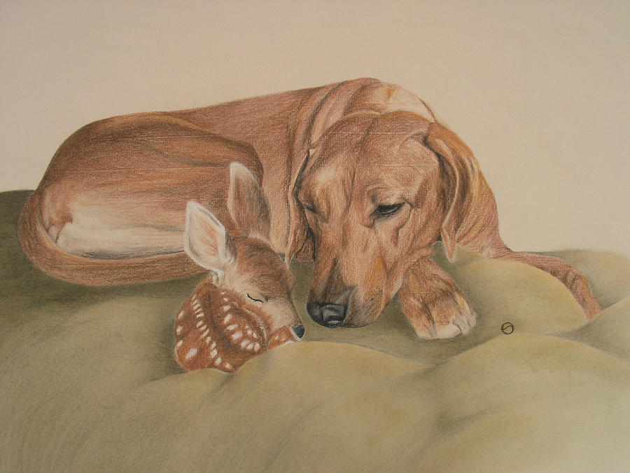 Dog Drawing - Gods Gift by Stephanie Harding
