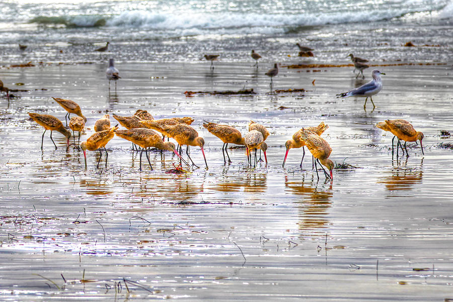 Godwits at San Elijo Beach by Dusty Wynne
