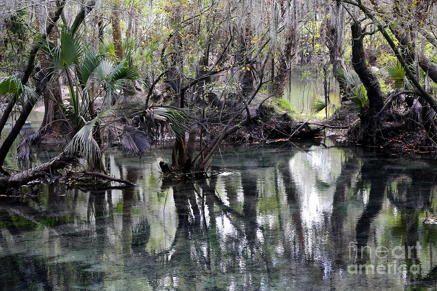 Florida Springs Photograph - Going Back In Time by Carol Groenen