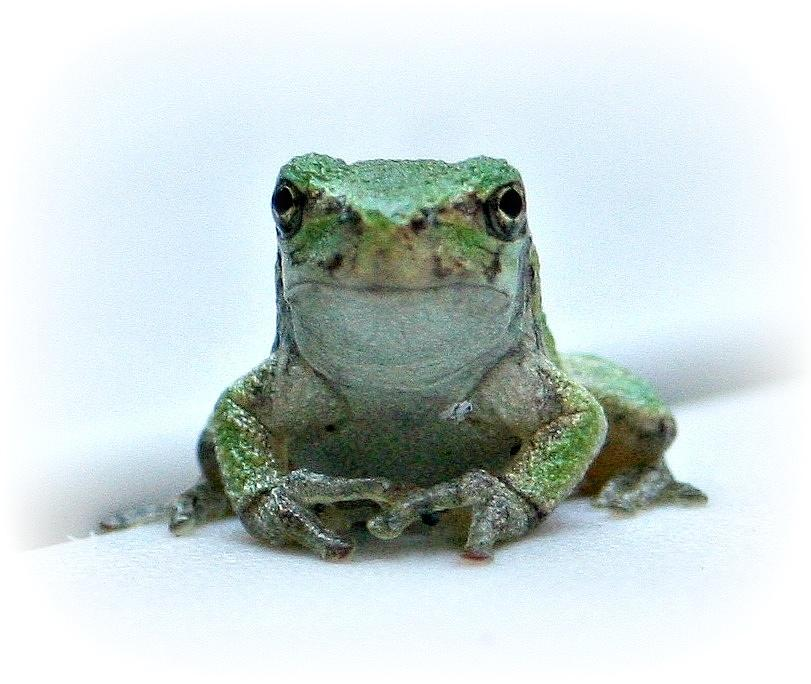 Frog Photograph - Going Forward  by Barbara S Nickerson
