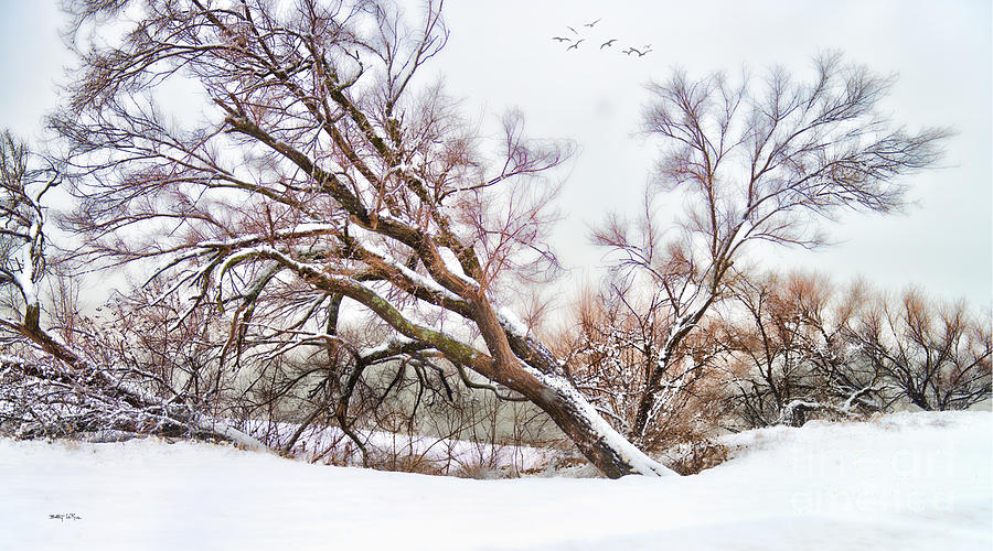 Snow Photograph - Going Softly Into Winter by Betty LaRue