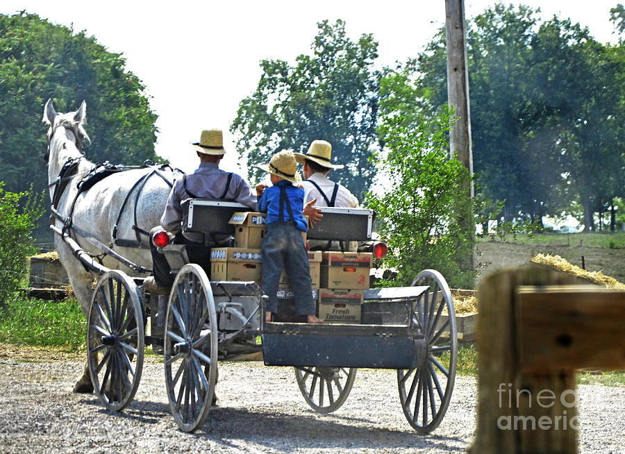 Mennonite Photograph - Going To Market by Paul Mashburn